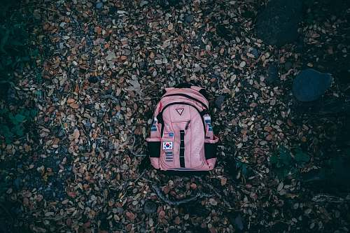 bag pink and black backpackl california