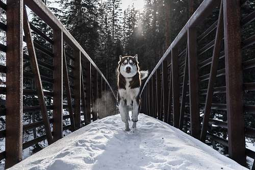 handrail running dog in bridge animal