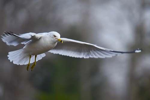bird selective focus photography of flying white bird grey