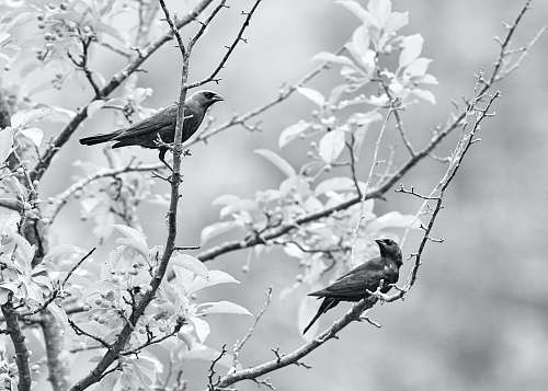 grey birds perching on tree branch bird