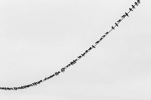 wire flock of bird perching on wire animal