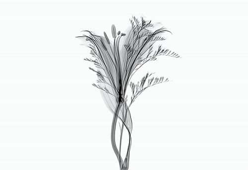 plant sketch of flower food