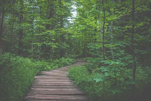 boardwalk view of forest during daytime path