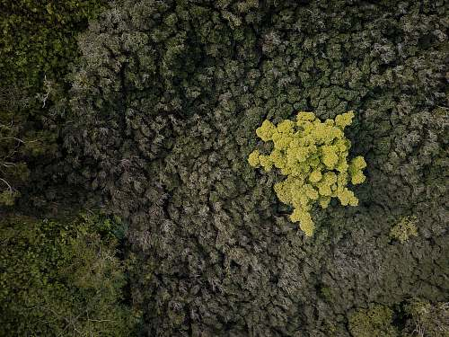 flora aerial photography of forest food