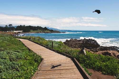 boardwalk brown wooden bridge near ocean during daytime bridge