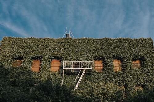 ivy green leaves covered building flora