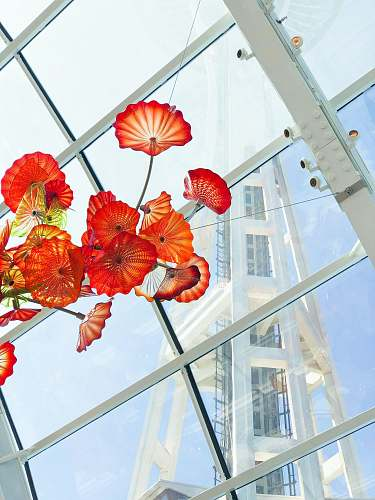 architecture red-petaled flowers plant