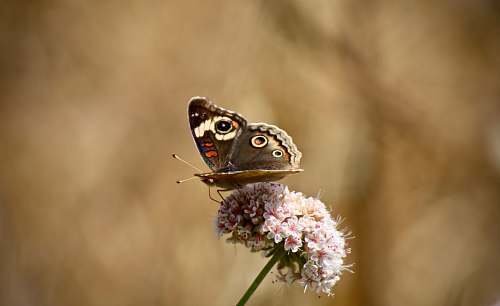 animal close-up photo of butterfly perching on pink petaled flower insect