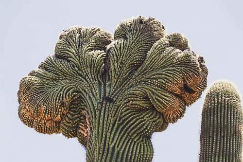 plant green and brown cactus nature