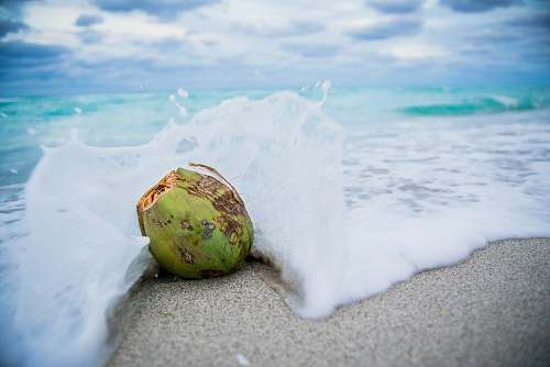 photo food coconut on beach with waves nut free for commercial use images