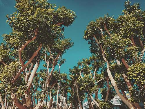 paper group of green-leafed tree during daytime san diego