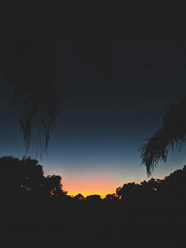 dusk silhouette of trees against sunset landscape photography nature