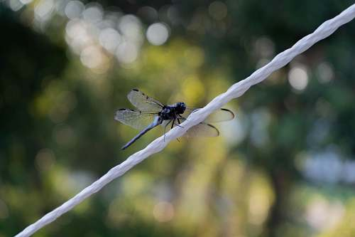 insect tilt shift lens photography of dragonfly on white string animal