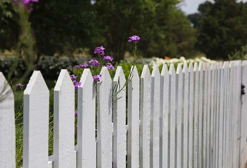 picket pink petaled flowers blooms near fence franklin