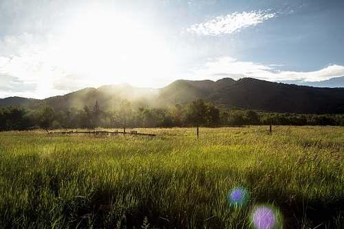 grassland grass field with mountain range grass