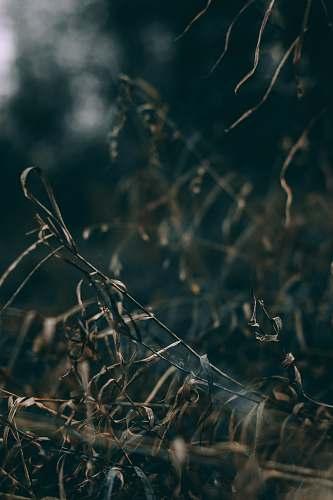 plant brown grass grass