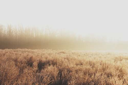 grass foggy brown field plant