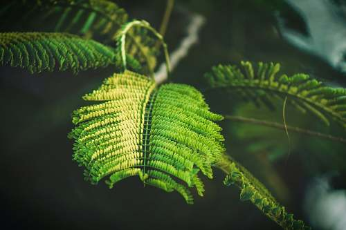 fern selective focus photography of fern-leafed plant plant