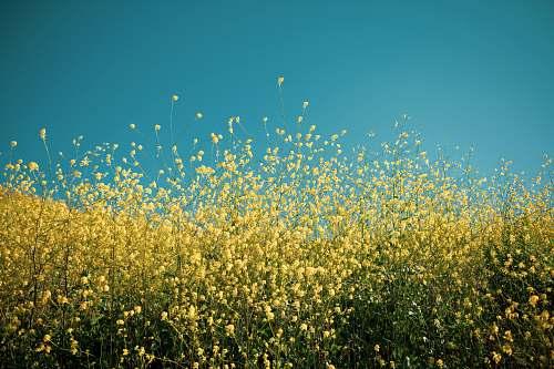 plant yellow petaled flowers bob jones trail