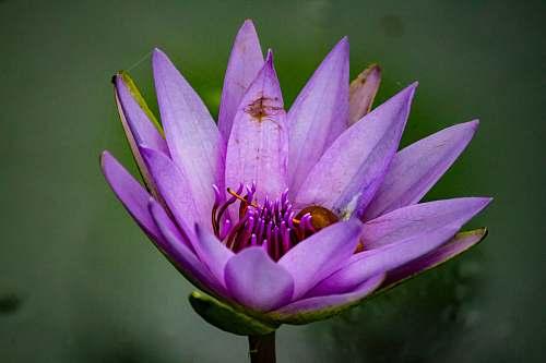 blossom closeup photography of purple petal flower plant