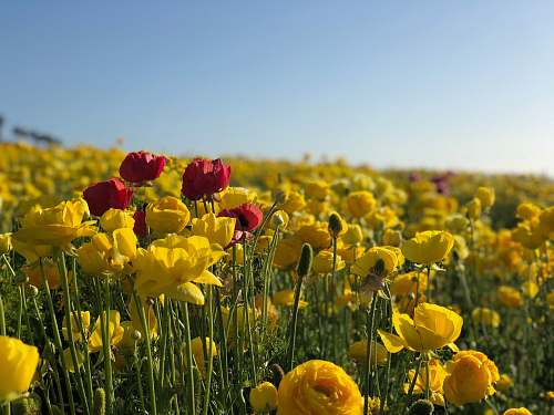 blossom landscape photo of red and yellow flowers flora