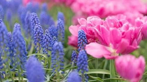 blossom pink and purple petaled flowers flora
