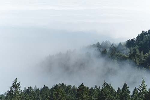 mist aerial photography of foggy forest weather