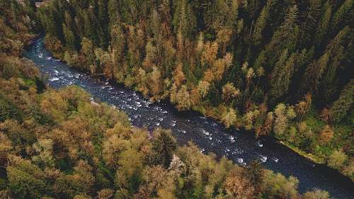 river aerial photography of river between pine trees landscape