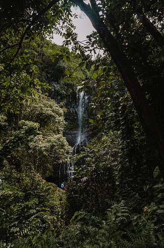 jungle water falls at forest during daytime tree