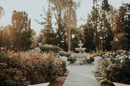 sacramento garden with outdoor fountain path