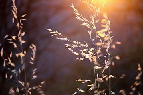 plant shallow focus photography of wheat plants flora