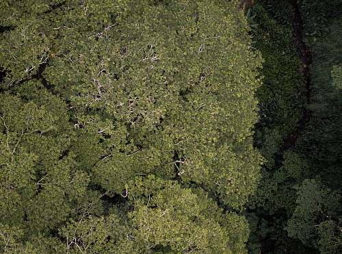 mānoa aerial photo of green forest honolulu