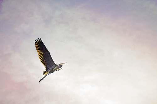 bird brown bird flying devils lake
