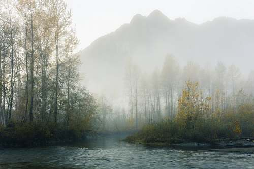 fog forest lake near on mountain snoqualmie