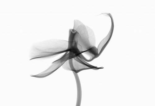 black-and-white grayscale photography of petaled flower new jersey institute of technology