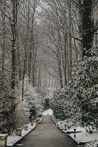 path pathway between bare trees at daytime photo winter
