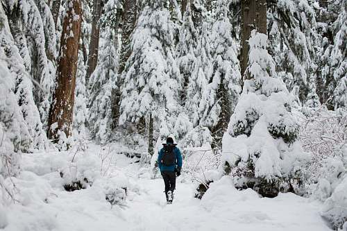 snow person walking on snow surrounded by trees forest