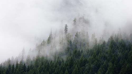 nature photography of green pine trees covered by fogs fog