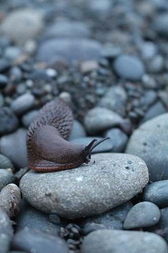 animal selective focus of snail on stone slug