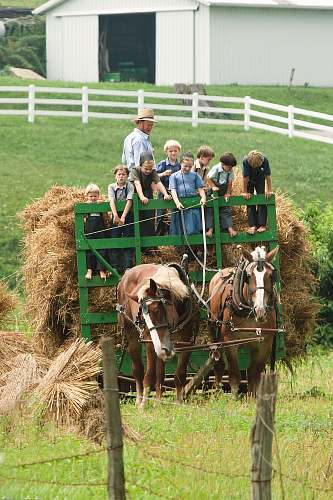 animal children riding carriage mammal