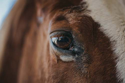 animal macro shot photo of horse left eye stepp stables