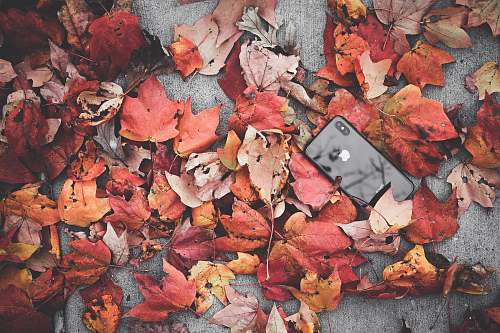 person black iPhone X beside withered leaves people
