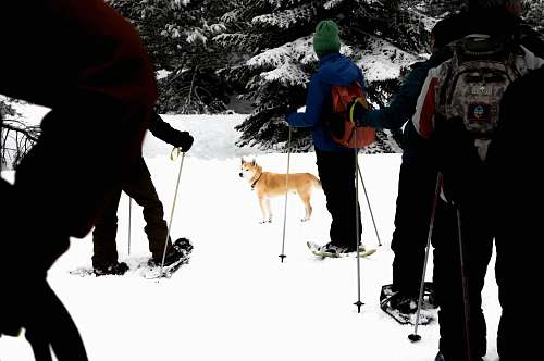 person people skiing with brown dog during daytime nature