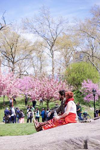 blossom people standing and sitting near trees during daytime plant
