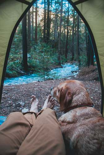 person person and dog inside tent in woods people