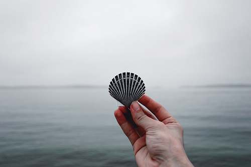 person person holding black seashell people