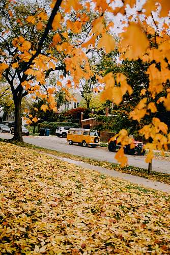 person photo of orange leaves van