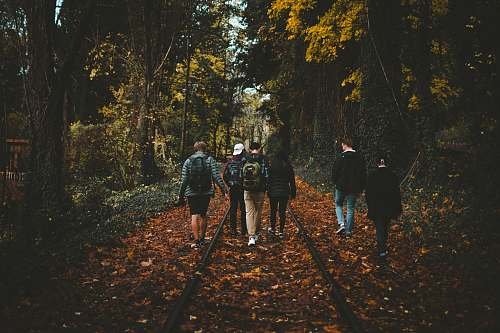 people six person walking on train rail surrounded by tall trees at daytime person