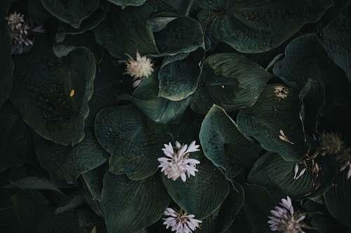 person white petal flower plants people
