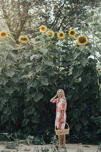 person woman holding basket standing under sunflowers people